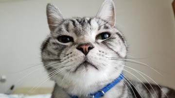 猫k 健康管理