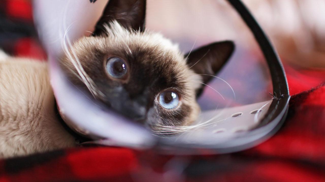 病気療養中の猫